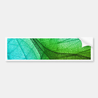 Sunlight Filtering Through Transparent Leaves Bumper Sticker