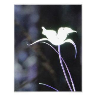 Sunlight Flower Photo Print