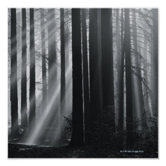 Sunlight in forest poster