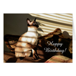 Sunlight Shadows Siamese Cat Card