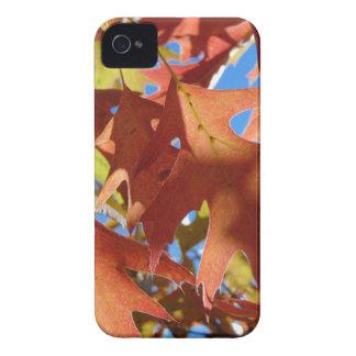 Sunlight Through Autumn Leaves iPhone 4 Case