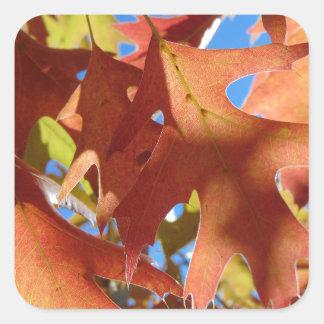 Sunlight Through Autumn Leaves Square Sticker