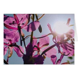 Sunlight Through Flowers Greeting Card