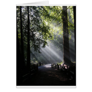 Sunlight Through The Redwood Trees Note Card