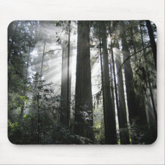 Sunlight through the Redwoods Mouse Pad