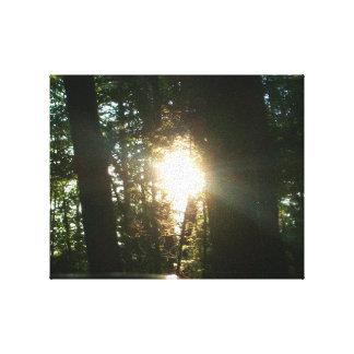 Sunlight Through The Trees Canvas Print