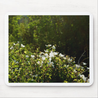 Sunlit Alpine Wildflowers Mouse Pad