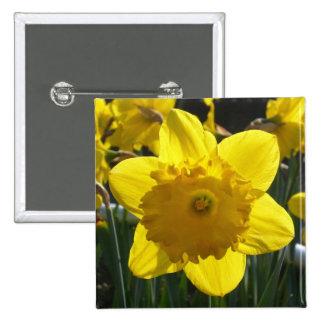 Sunlit Daffodil Pinback Buttons