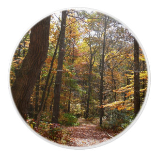 Sunlit Fall Trail in Laurel Hill State Park Ceramic Knob