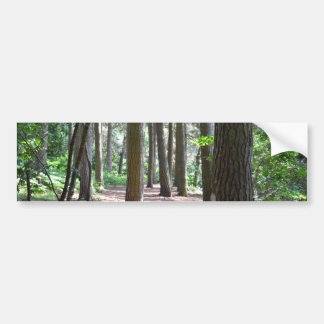 Sunlit Forest Floor Bumper Sticker