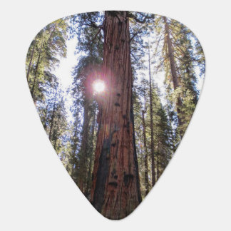 Sunlit Forest Guitar Pick