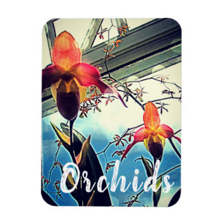 Sunlit Orchids Photo Magnet