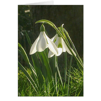 Sunlit Snowdrops Card