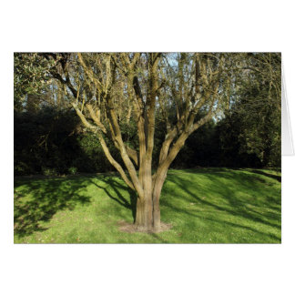 Sunlit Tree Greeting Card