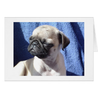 sunning pugs greeting card