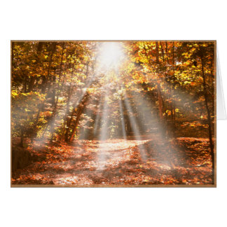 Sunny Autumn Vermont Woods - blank cards w/ border