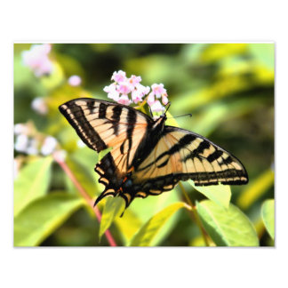 Sunny Butterfly Art Photo