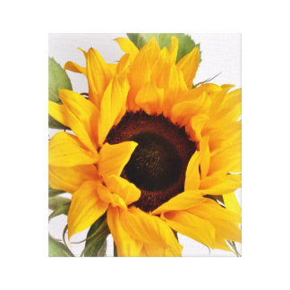 Sunny Head Canvas Print