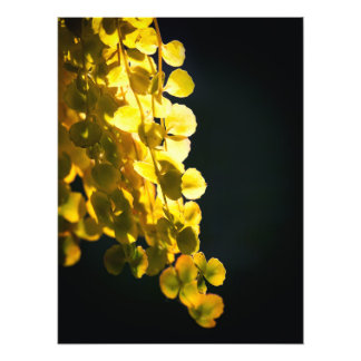 Sunny leaves photo print