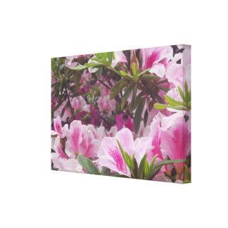 Sunny Light Pink Flower Floral Blossom Canvas Canvas Print