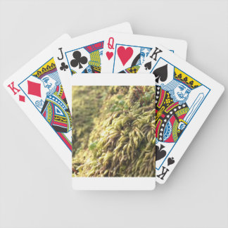 Sunny Moss and Worts Bicycle Playing Cards