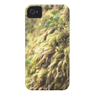 Sunny Moss and Worts iPhone 4 Case