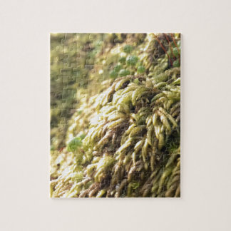Sunny Moss and Worts Jigsaw Puzzle