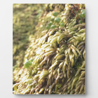 Sunny Moss and Worts Plaque