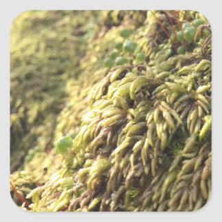 Sunny Moss and Worts Square Sticker