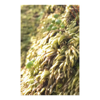 Sunny Moss and Worts Stationery
