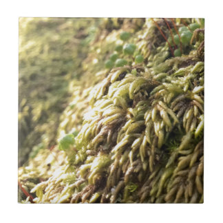 Sunny Moss and Worts Tile