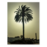 Sunny Palm Post Cards