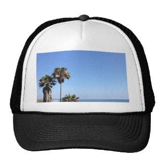 sunny palm trees cap