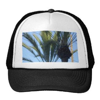 Sunny Palm Trees Trucker Hats