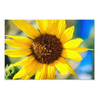 Sunny Photo Print