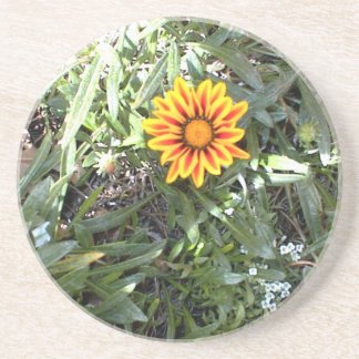 Sunny Red and Yellow Blossom Beverage Coasters