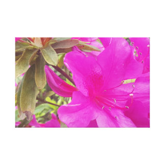 Sunny Red Pink Flower Floral Blossom Print Canvas Canvas Print