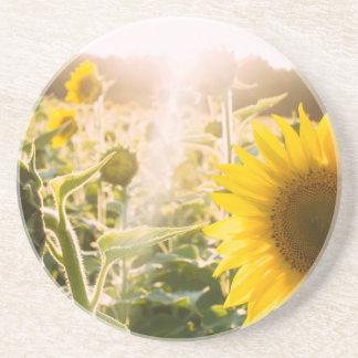 Sunny Sunflower Field Coaster