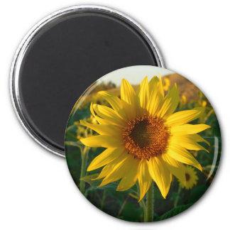 Sunny Sunflower Magnet
