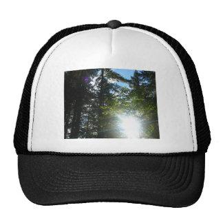 Sunny Woods Cap