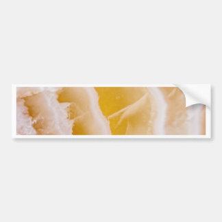 Sunny Yellow Agate Bumper Sticker