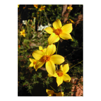Sunny Yellow Flowers. Bidens. Pack Of Chubby Business Cards
