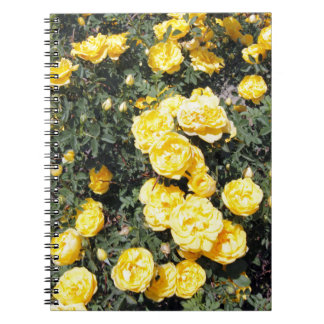 Sunny Yellow Rose Flowers Bus Notebooks