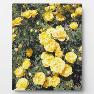 Sunny Yellow Rose Flowers Bus Photo Plaque