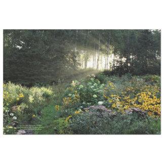 Sunrays in Late September Gardens Tissue Paper