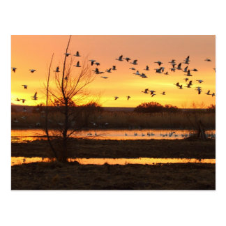 sunrise and Geese Postcard