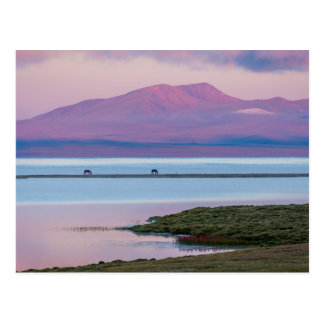 Sunrise at Song Kul lake Postcard