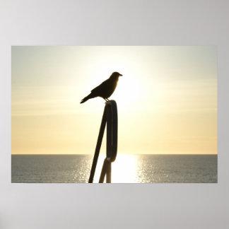 Sunrise Crow Silhouette Poster