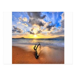 Sunrise Driftwood Beach Postcard