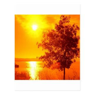 Sunrise Hot Amber Postcard